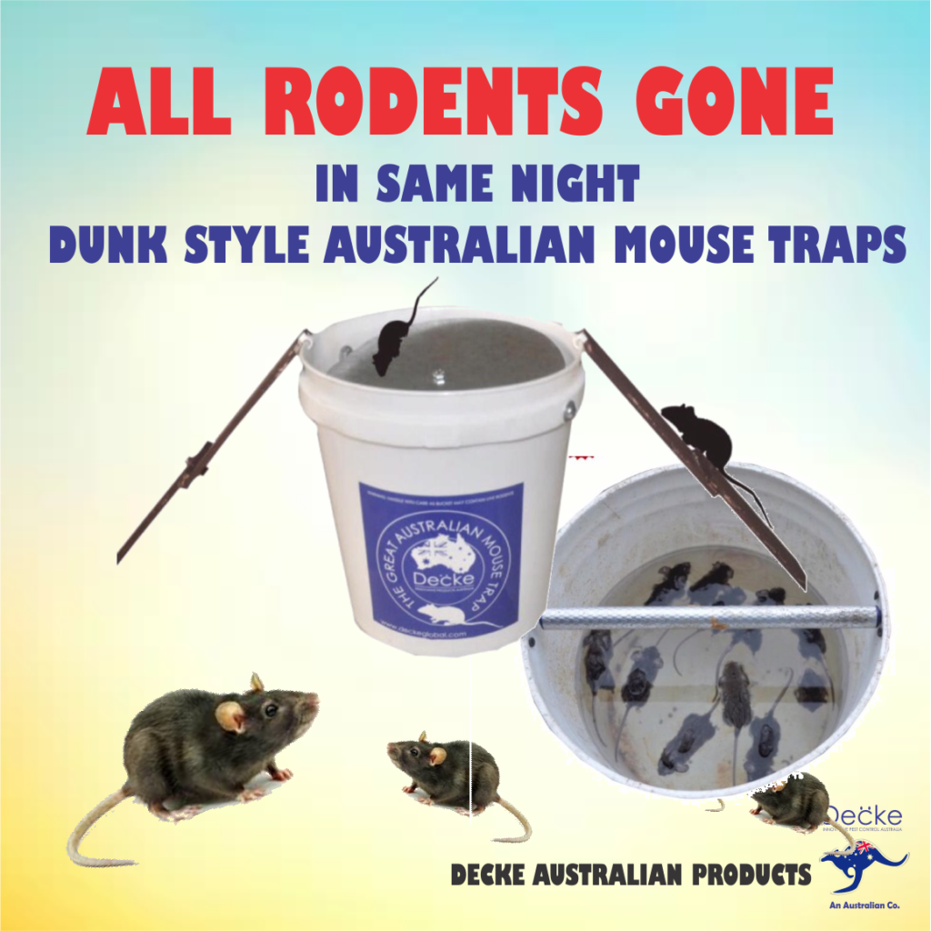 Dunk Style Mouse Traps